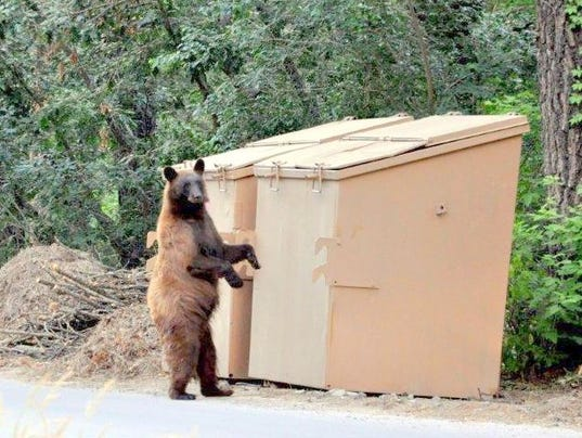 stacy's bear at dumpster