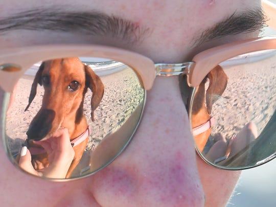 c73087e9b874d Poob the dachshund is reflected in Tabitha Headlee s sunglasses at Canova  Beach Park near Indian Harbor