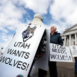 Feds: Mexican gray wolves see increase in wild population