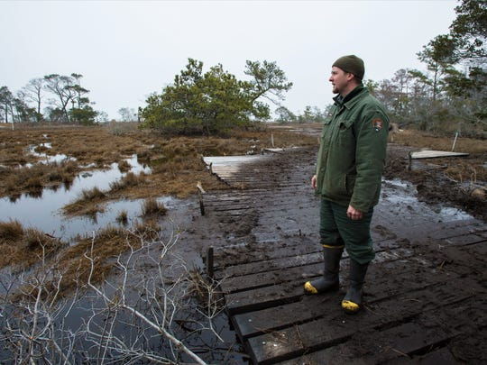 Since 2008, the National Park Service has undertaken a wetlands restoration project in an attempt to remediate the effects of thousands of mosquito ditches dug into the bayside in the early half of the 20th century, when parts of Assateague Island were being developed for homeowners. Eric Sherry, NPS biological science technician for aquatic resources, stands in the Valentines area, where he has been working to restore the natural processes of the wetlands.