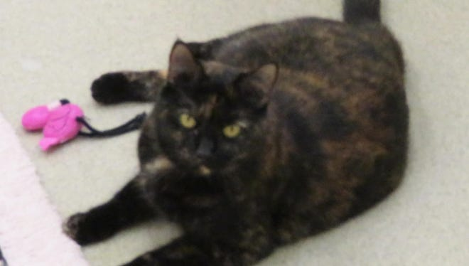 If my new owner is patient and loving, I will show what a sweet, playful kitty I can be!