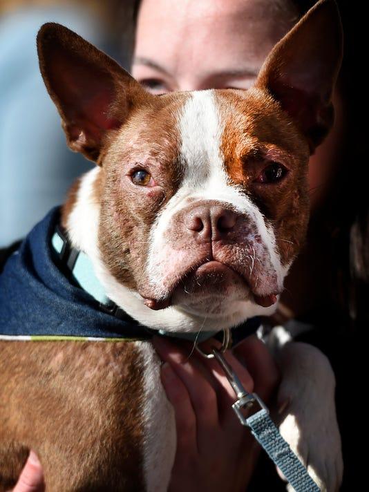 ldn-mkd-dog cruelty bill-
