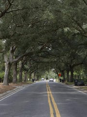 The 12th Avenue Tree Tunnel is one of East Hill's iconic images.
