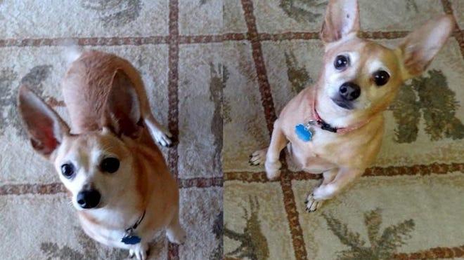 Trixie and Norton