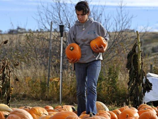Tilleraas pumpkin patch 2