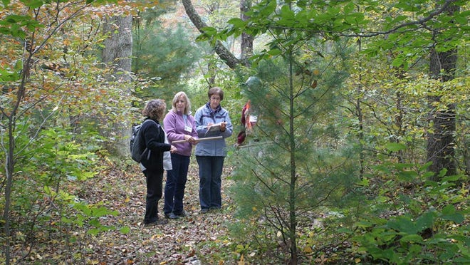 The annual Women and Their Woods educational retreat will be online this year.