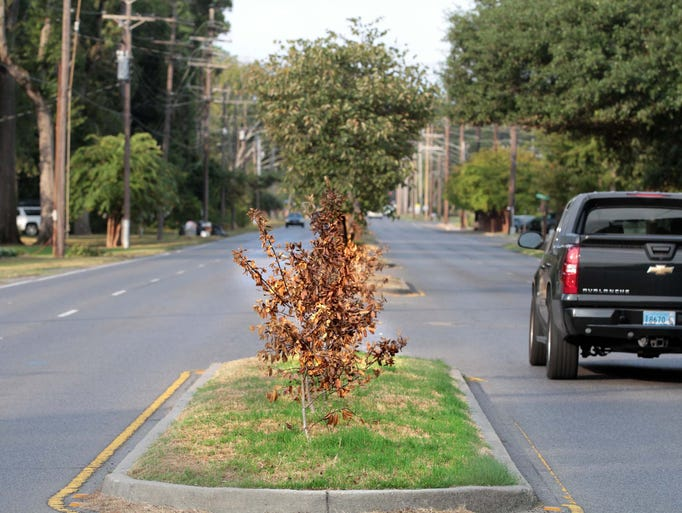 Dying foliage, litter and signs mar the beauty of Forsythe