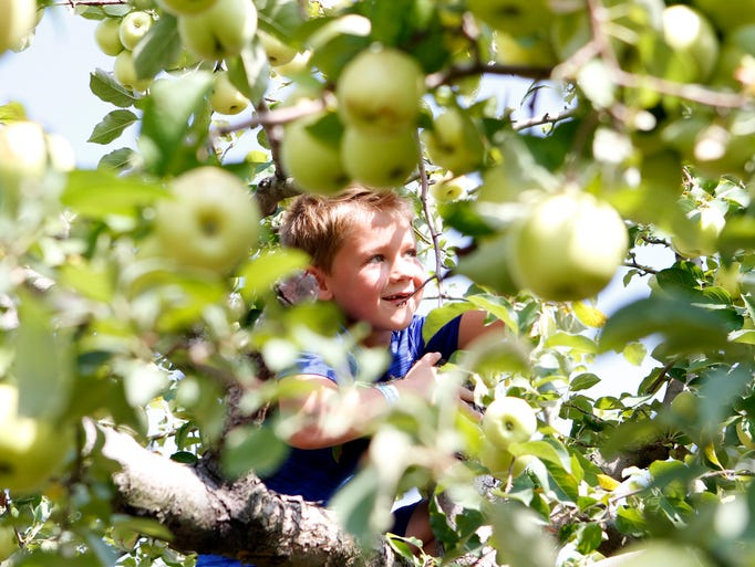 Ethan Osborn, 8, of Jackson, searches for the perfect