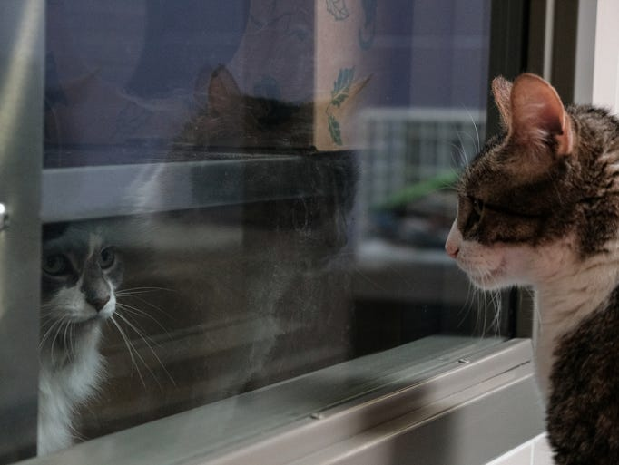 Cats look at each other through a window at the new