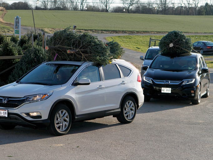 Christmas trees were selling quickly on opening day