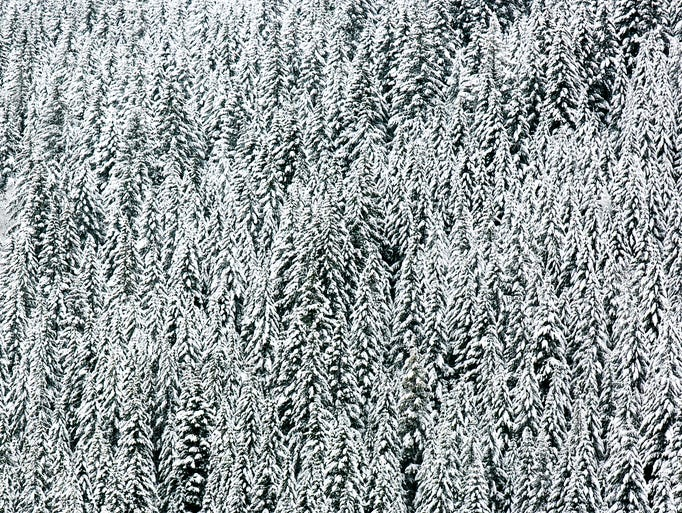 Large swaths of trees are dusted in snow along the