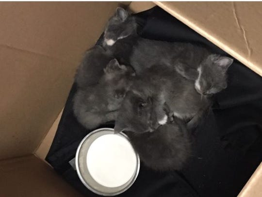These kittens were also found abandoned Thursday morning