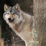 Smith: Best science needed for Wisconsin wolf plan