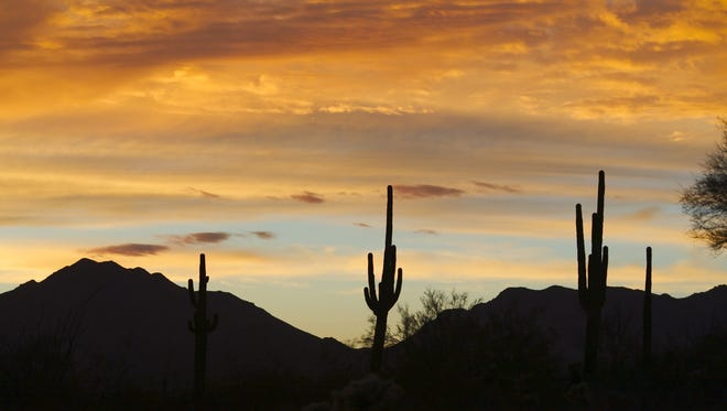 The saguaro cactus can only be found in the Sonoran desert, and that's where it should stay.