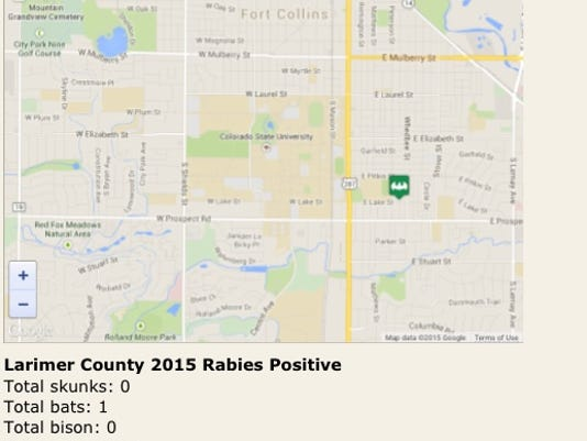 Rabid Bat Larimer County