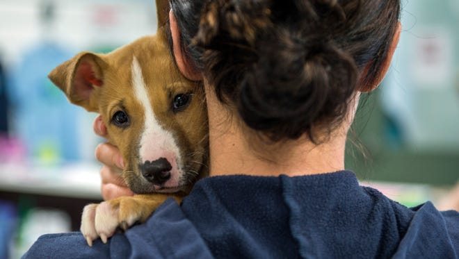Two-month-old Pearson is held by a staff member Friday at the Camden County Animal Shelter in Gloucester Township.