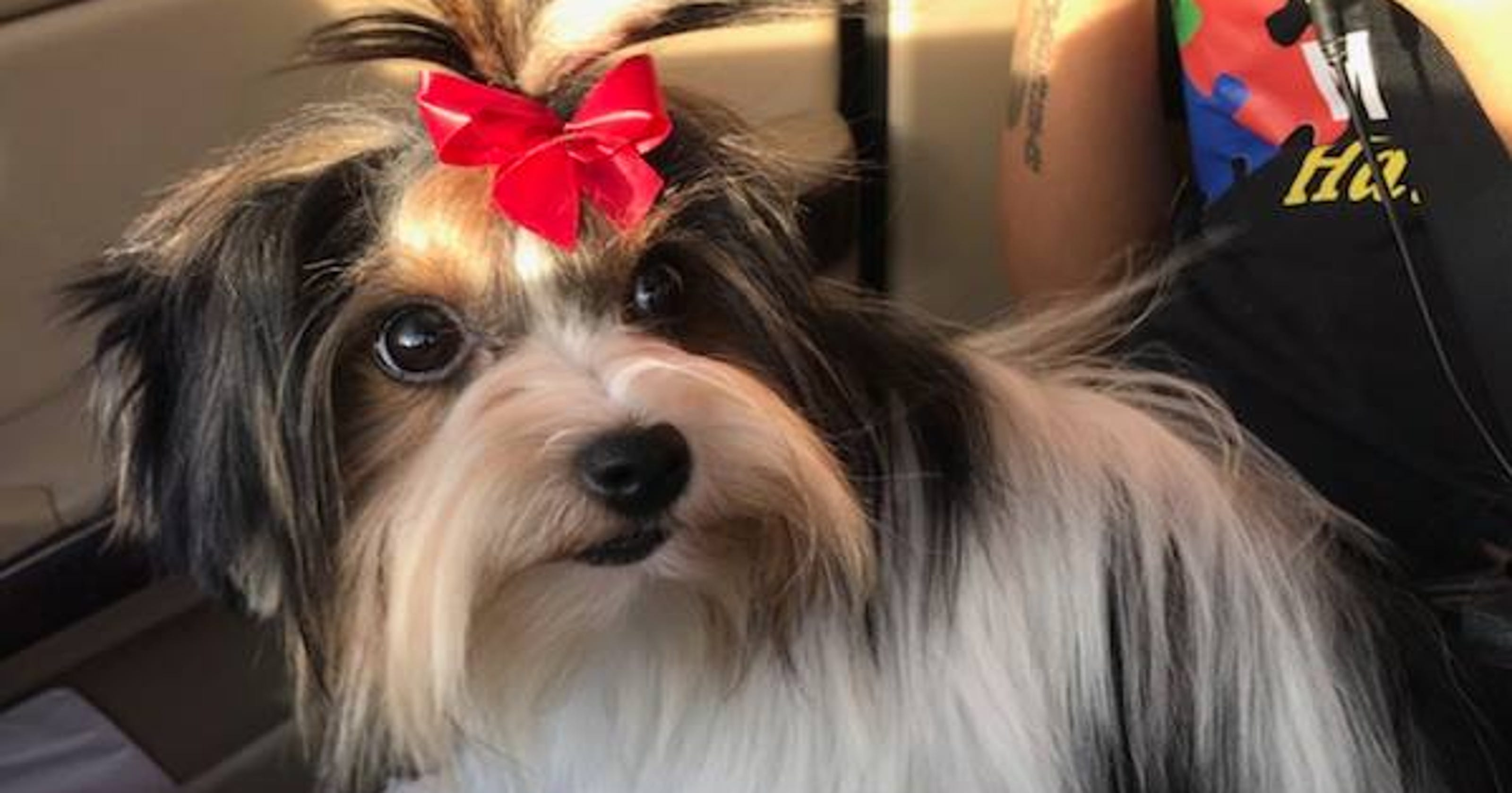 Family dog goes missing after trip to mesa groomer police say solutioingenieria Choice Image