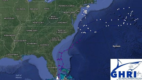 Hypower, a mako shark tagged off Ocean City in spring, has traveled 5,000 miles to South Florida.