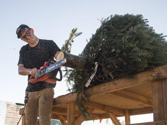 Christmas trees in Arizona
