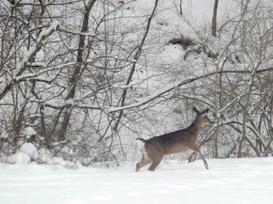 MNCO 0325 Dick Martin Division Of Wildlife talks Whitetail Count.jpg