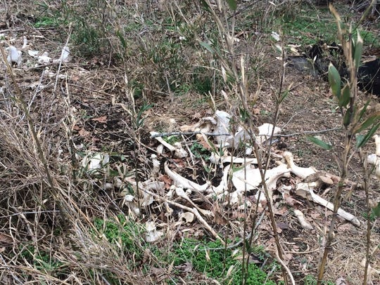Investigator found remains of 15 dead cows on property