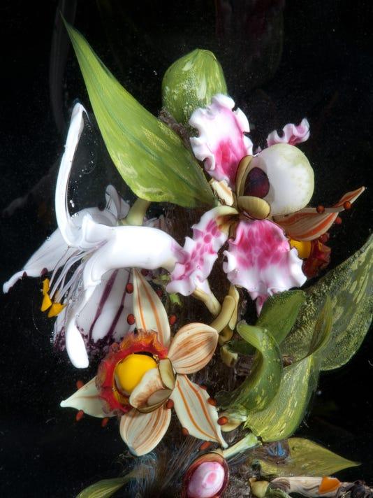 636676074624885347-Orchid-Bouquet-Botanical-close-up.jpg