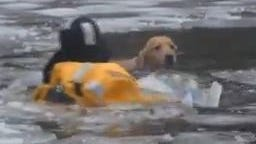 A icy river rescue of man's best friend.