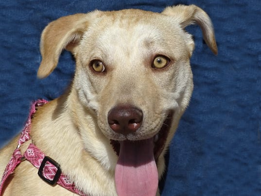 PET-OF-THE-WEEK-MOLLY-MARIE.