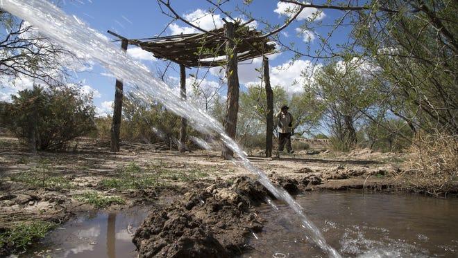 Groundskeeper Robert Tenario Jr. checks irrigation on April 1, 2016, at the Tohono O'odham  Hikdan Riparian Restoration Project.