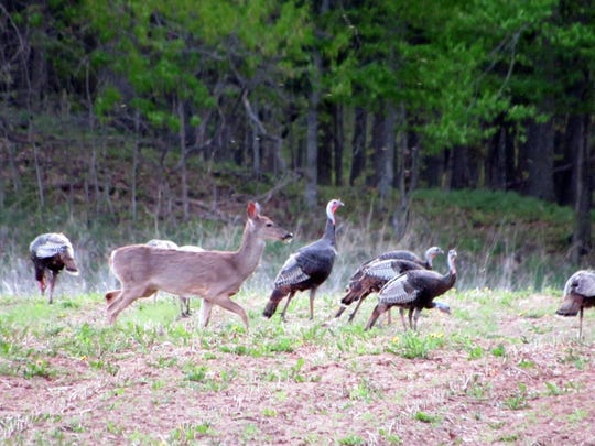 Nature photo while on our farm lane. We raise large turkeys on Sunnybook Farm.