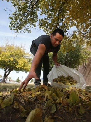 Michael Madera picks up leaves Thursday afternoon outside the Pavo Real Recreation Center, 9301 Alameda. The high Thursday set a record at 74 degrees. For the current forecast, visit elpasotimes.com/weather