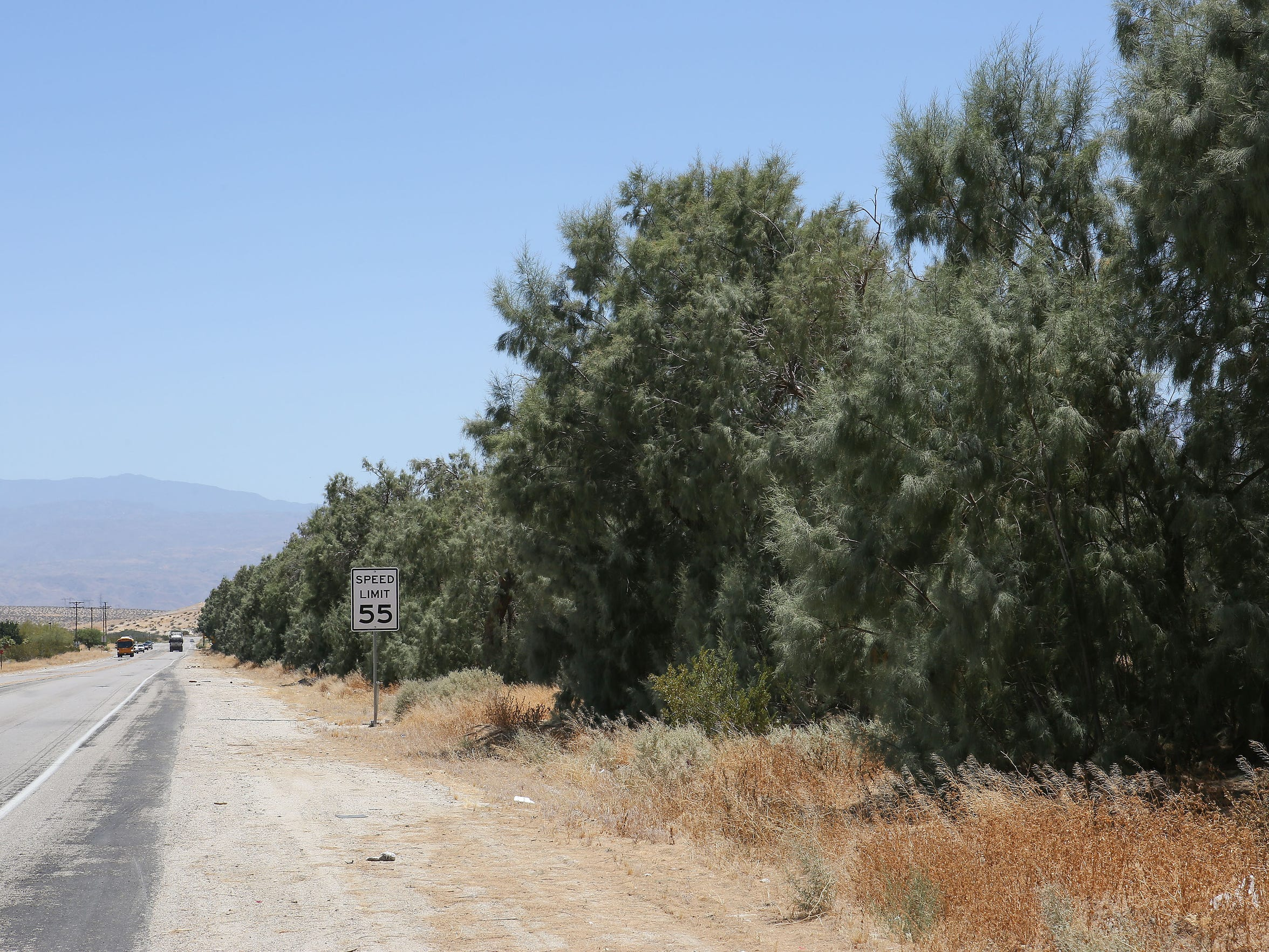 A row of tamarisk trees line a street in Desert Hot