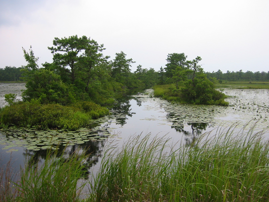 Let the beauty of the Pinelands inspire your writing.
