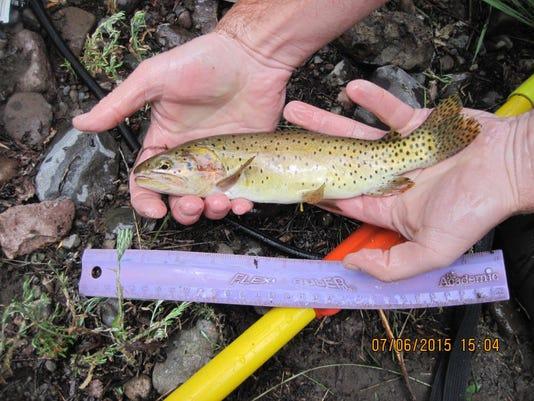 Bonneville cutthroat trout-photo-