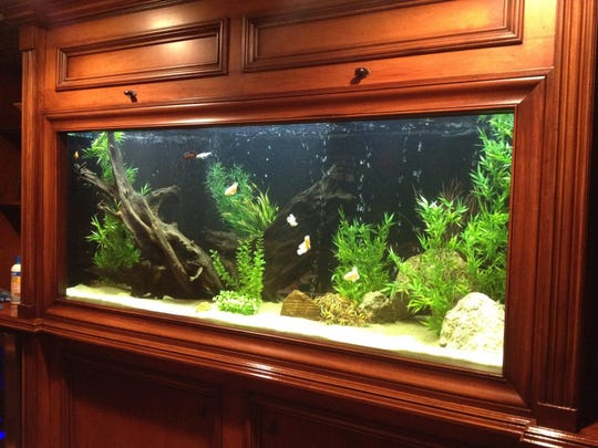 A 220-gallon built-in freshwater aquarium installed by Aquaholics Aquarium Services.