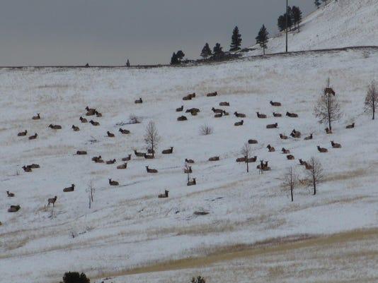 elk on winter hillside