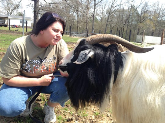 LaDonna Mock kneels to talk to VA, a goat she captured from the Alexandria VA Medical Center grounds in Pineville. The goat now will live at Gone Wild Safari in Tioga.