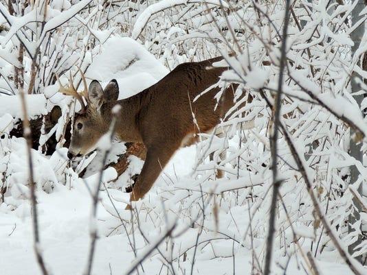 APC zimmer nature tracking wildlife LEAD.JPG