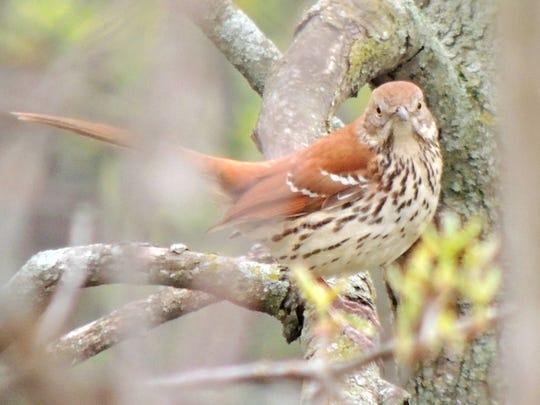 APC zimmer nature spring migration hotspots 3.JPG