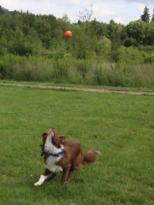 Like a seasoned outfielder, Bailey keeps her eye on the ball and anticipates the catch.