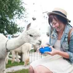 Manitowoc, Two Rivers events: Alpaca Days at LondonDairy, StorySlam at Courthouse Pub