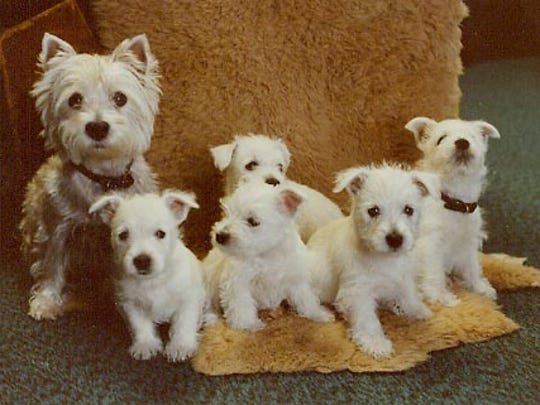 Robert Eiceman took this photo of Kelly and her five female pups.