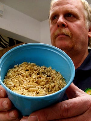 It's not corn flakes. Todd Wood displays a tub of wax worms in worm bedding, part of the bait menu at Liberty Doors in North Liberty