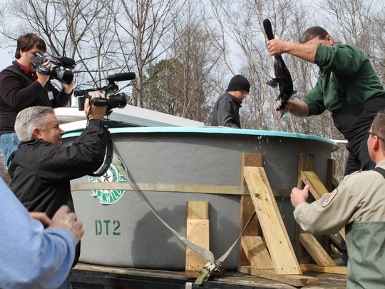 The USFS prepares to release paddlefish into Cross Lake.