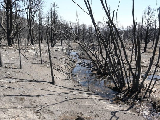Damage is seen in Great Basin National Park along Strawberry Creek from a wildfire that led to the death of a Vermont firefighter.