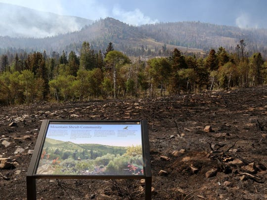 Damage is seen in Great Basin National Park from the Strawberry Creek fire.