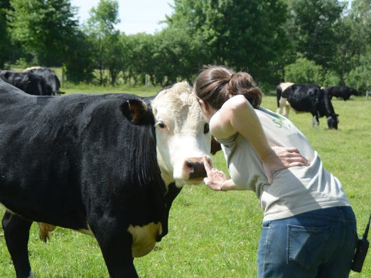 A Farm Sanctuary volunteer interacts with Frank, the
