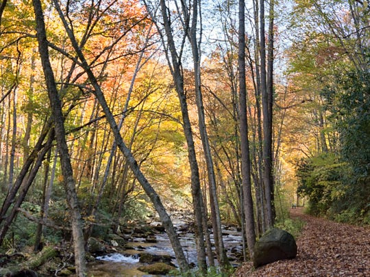 A drive along winding Little River Road should be full of color for a few weeks.