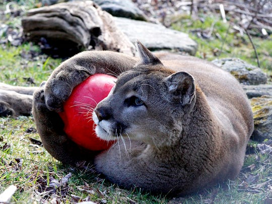 Grandfather Mountain's Animal Birthday Party will be June 13.