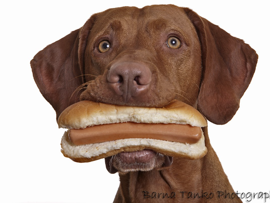 636607766499209296-hot-dog-dog.png